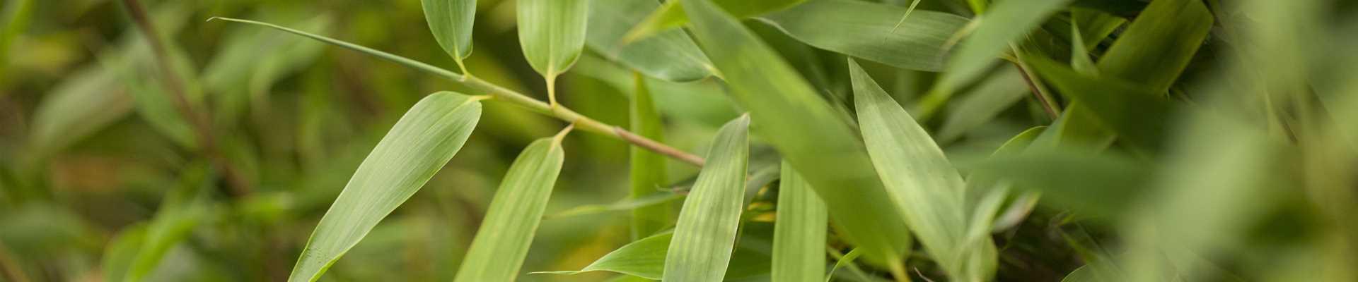 Pflanzenvermietung
