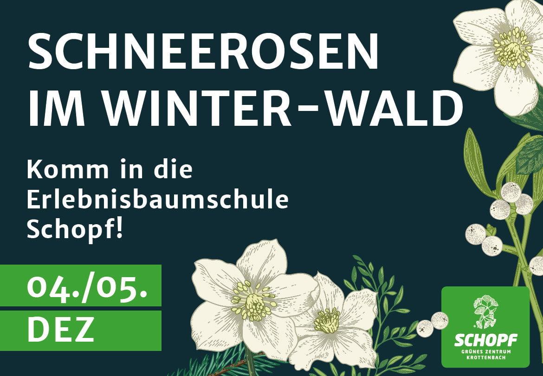 Schneerosen Winterland
